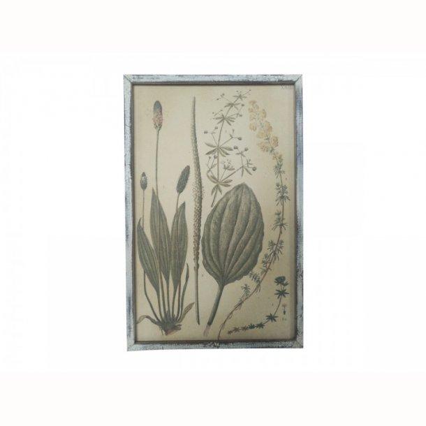 Billede med plante print