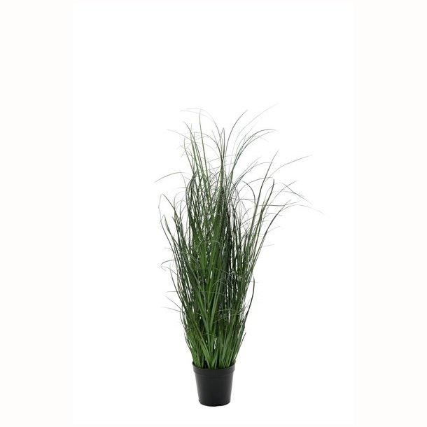 Græs i potte 90 cm