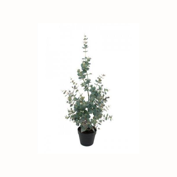 Eucalyptus træ 95 cm