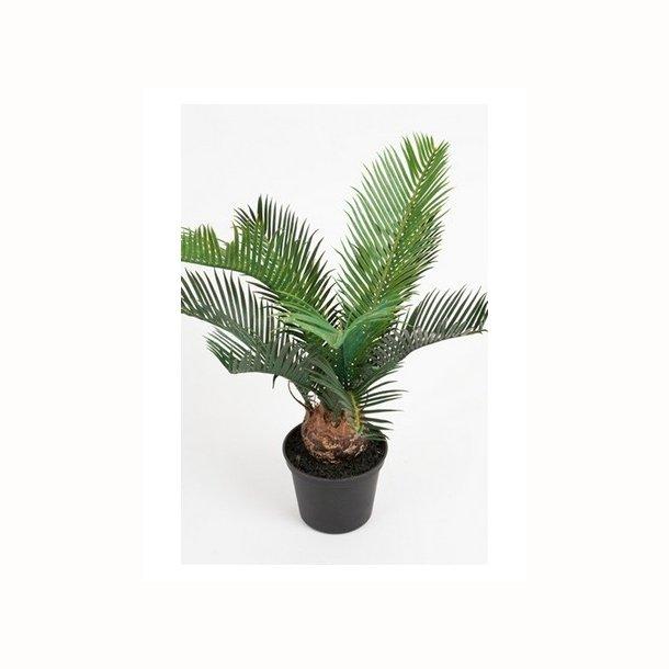 Cycas palme 39 cm