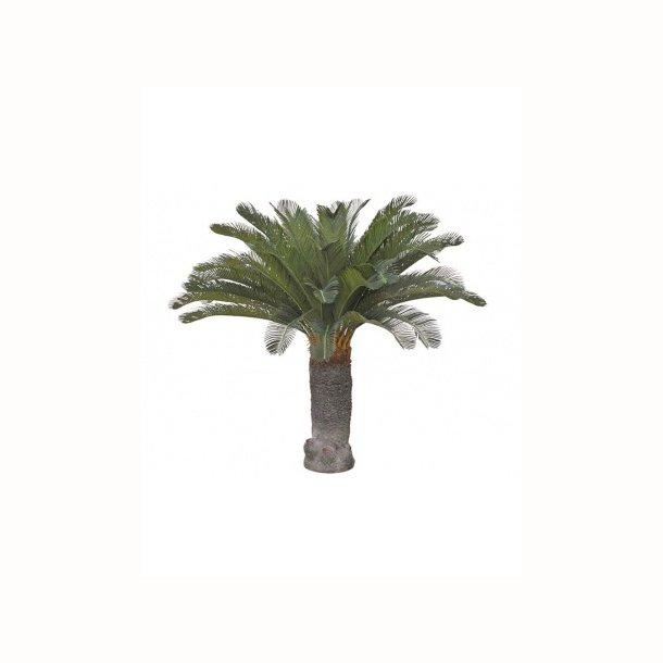 Cycas palme 100 cm