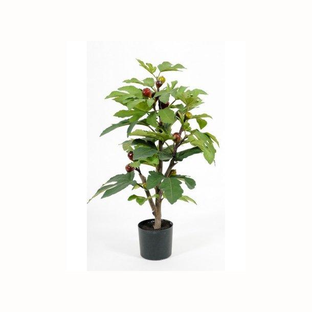Figentræ 65 cm