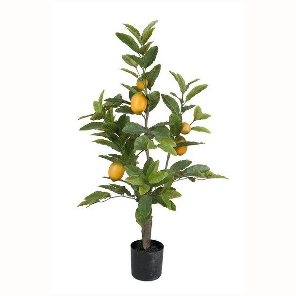 Citrontræ 90 cm