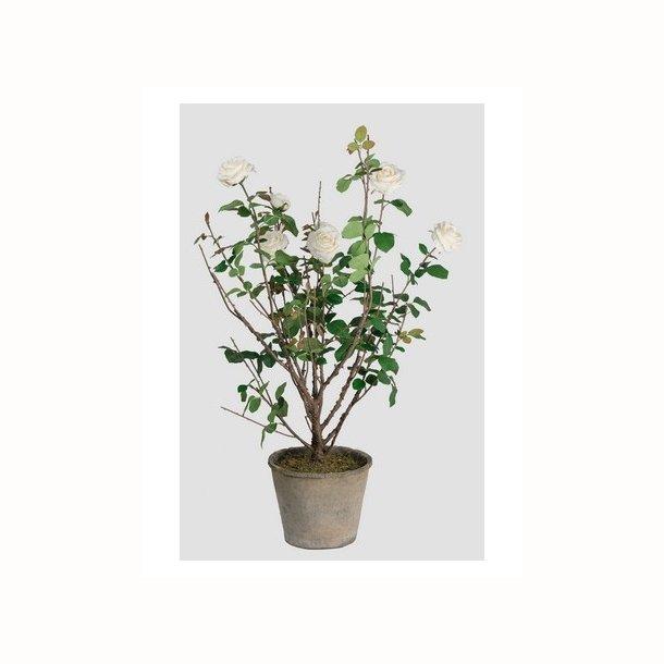Rose 120 cm. hvid