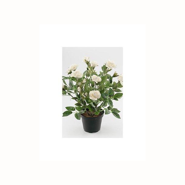 Rose 30 cm. hvid