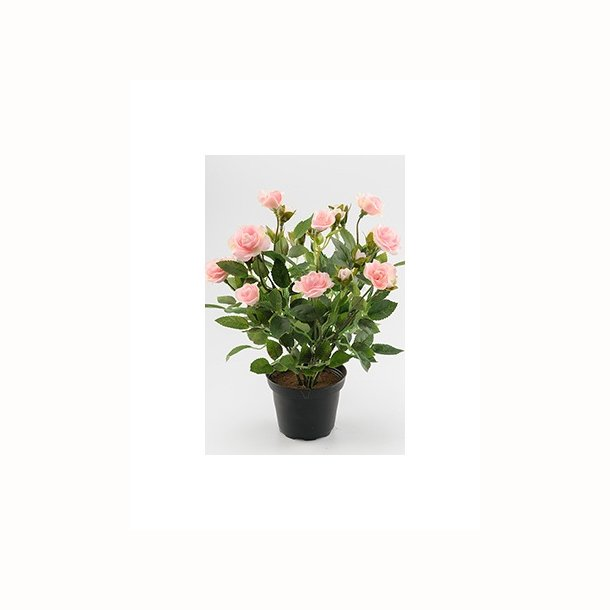 Rose 30 cm. rosa
