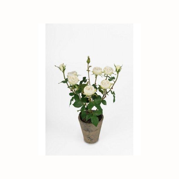 Rose i krukke 45 cm. hvid