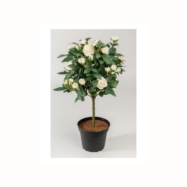 Rosentræ 45 cm. hvid