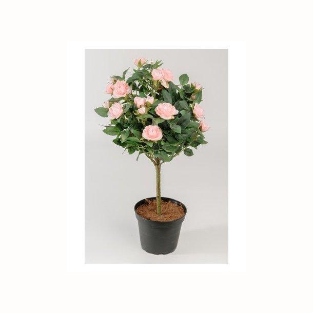 Rosentræ 45 cm. rosa