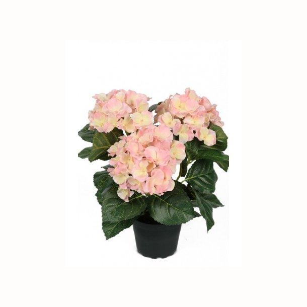 Hortensia 30 cm. rosa