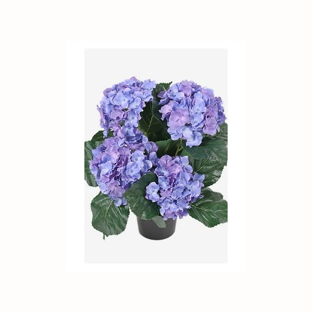 Hortensia 37 cm. blå