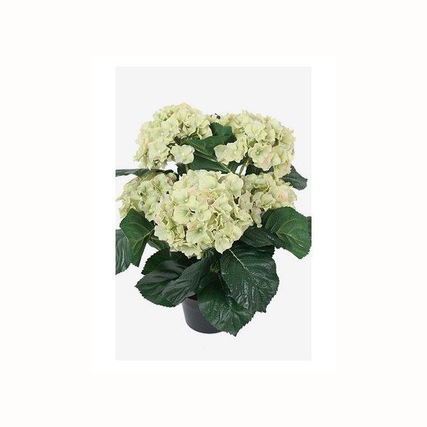 Hortensia 37 cm. lime