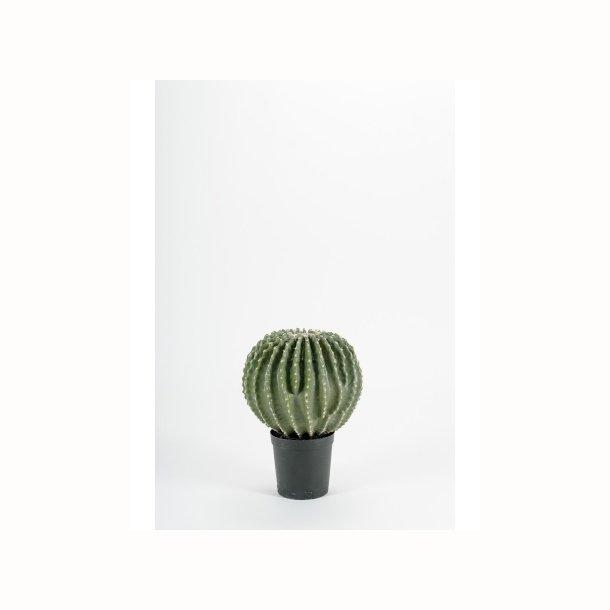 Kaktus 40 cm.