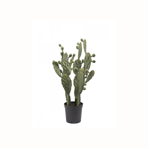 Kaktus 85 cm