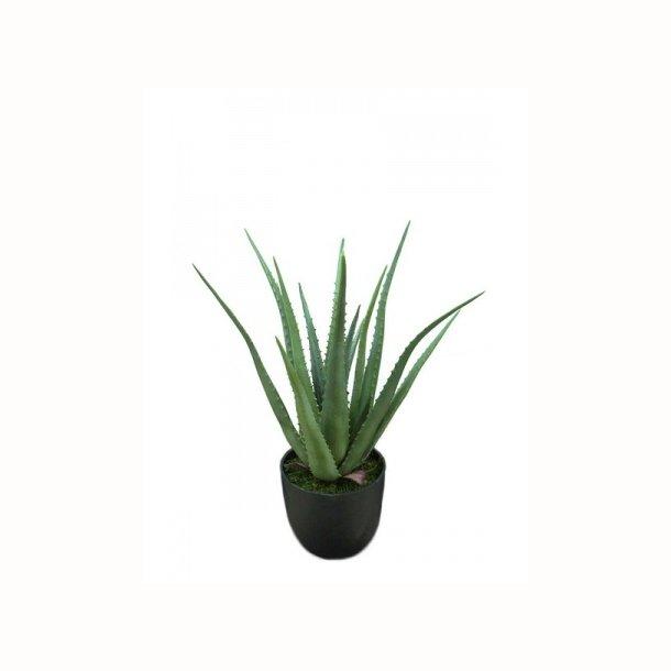 Aloe i krukke 55 cm