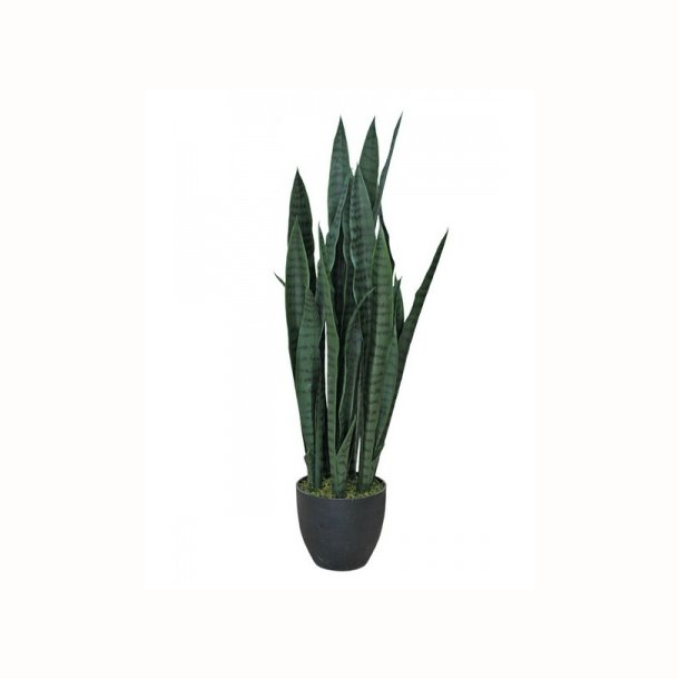Sansiveria 85 cm
