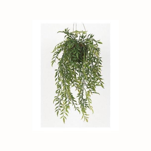 Hoya i ampel 52 cm