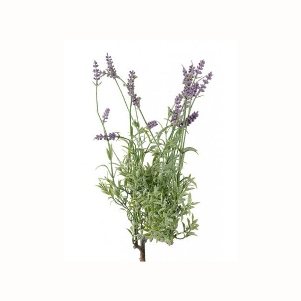 Lavendel buket 50 cm
