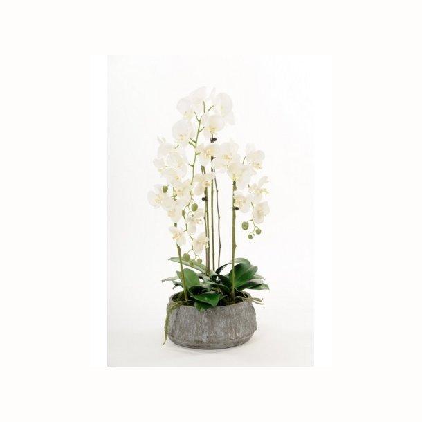 Phalaenopsis 85 cm. hvid