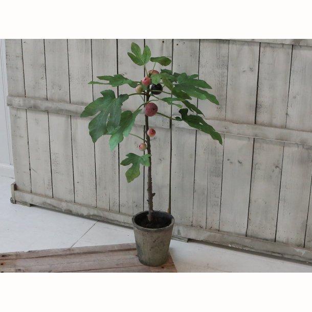 Figentræ i gl. keramik potte